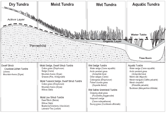 Coastal Plain Tundra Types